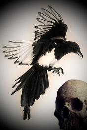 0aaf4697aab1a171fdd44f01a23c73e8--magpie-tattoo-raven - Copy1